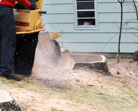a large tree stump being ground down with professional tree removal tools