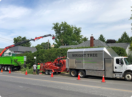 a Wright Tree Services truck and team removing trees from a property in Ottawa