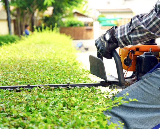 a Wright Tree employee trimming hedges at a residential area in Ottawa