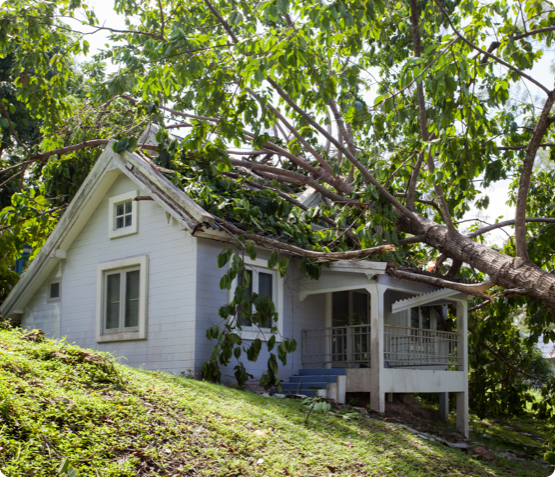 a tree that has fallen on top of a small home in Ottawa
