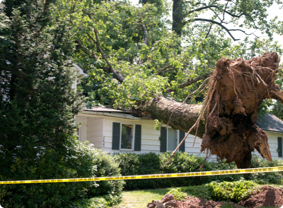 a large tree that has fallen on top of a bungalow in Ottawa