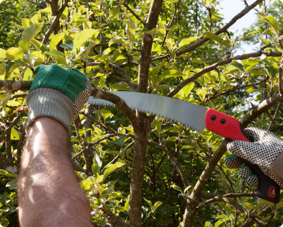 a Wright Tree Services employee removing branches from an overgrown tree