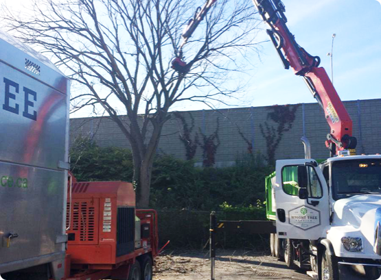 Wright Tree arborists skillfully remove a tree from an Ottawa property