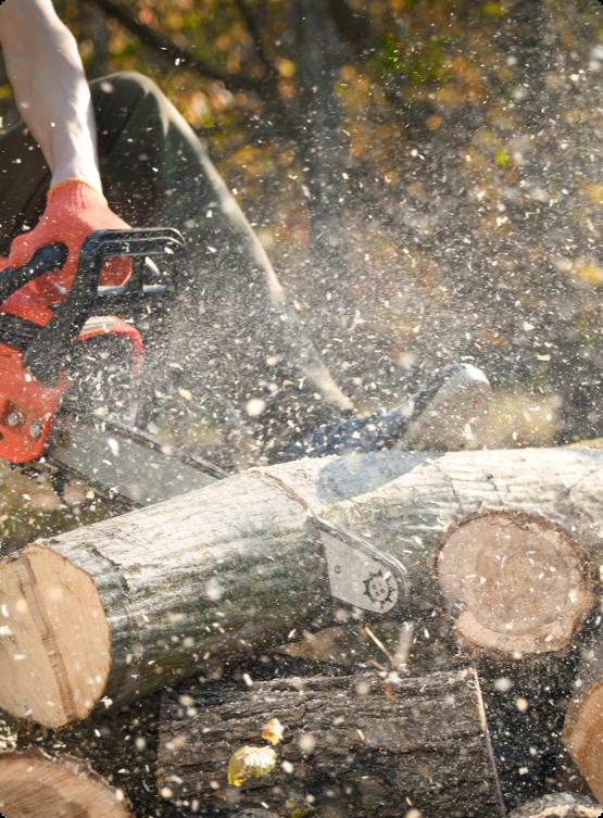 A Wright Tree arborist cuts up a felled tree in Ottawa