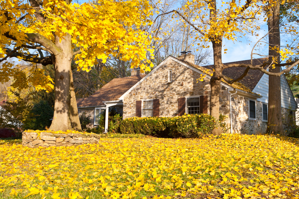 home with yard and trees in fall