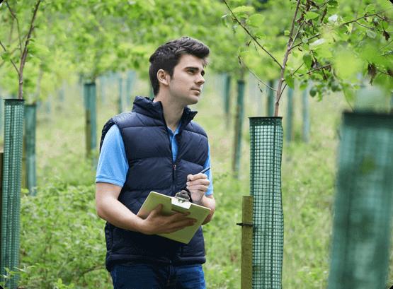 arborist in Ottawa assessing trees
