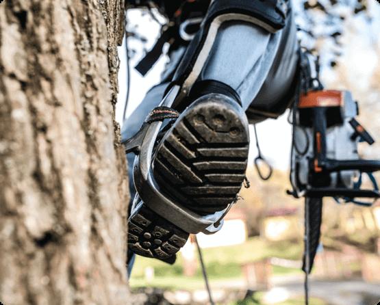arborist using proper equipment for tree trimming services in Ottawa