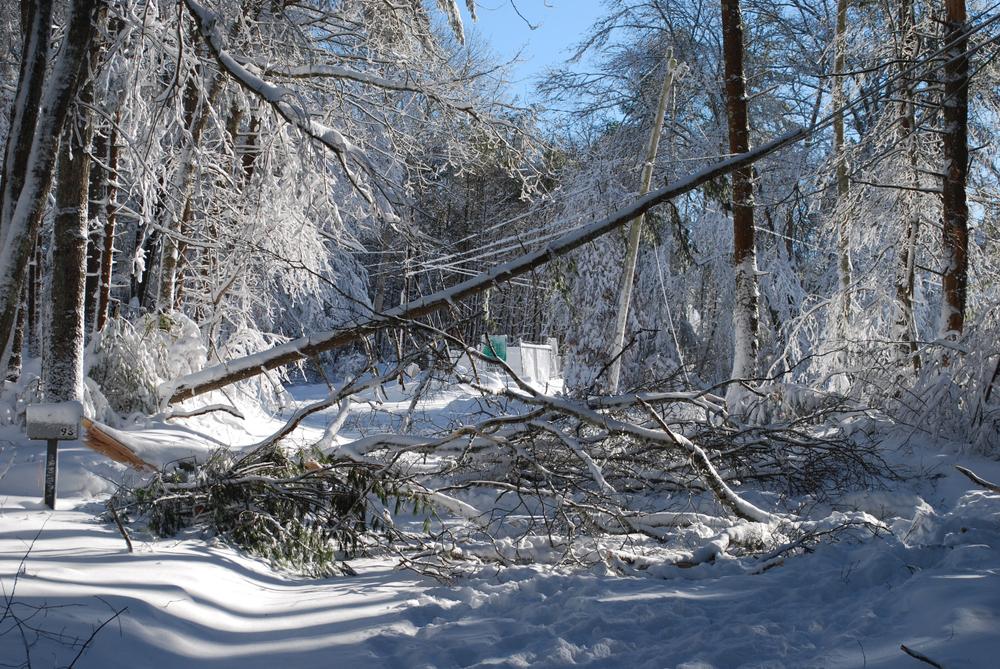 ice damage fells tree in ottawa