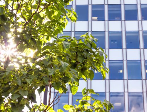 The Importance of Commercial Tree Services