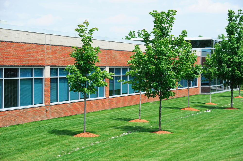 trees on commercial property in ottawa canada
