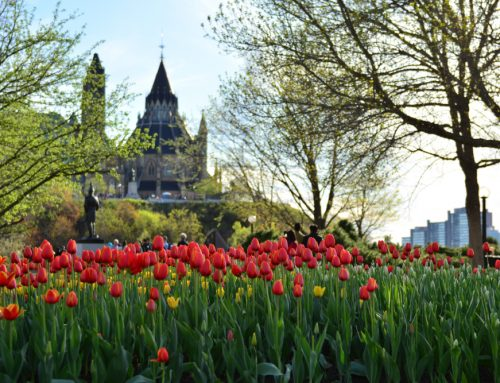 Spring Tree Tips for Ottawa Homeowners & Property Managers