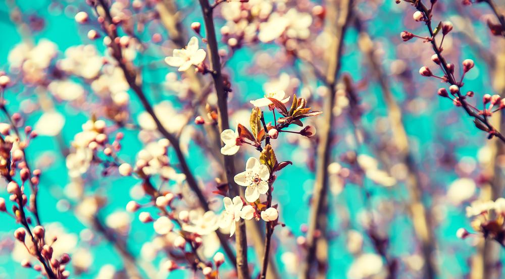 spring tree in ottawa canada