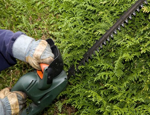 Spring Hedge Trimming: Get Your Hedges Ready for the Growing Season