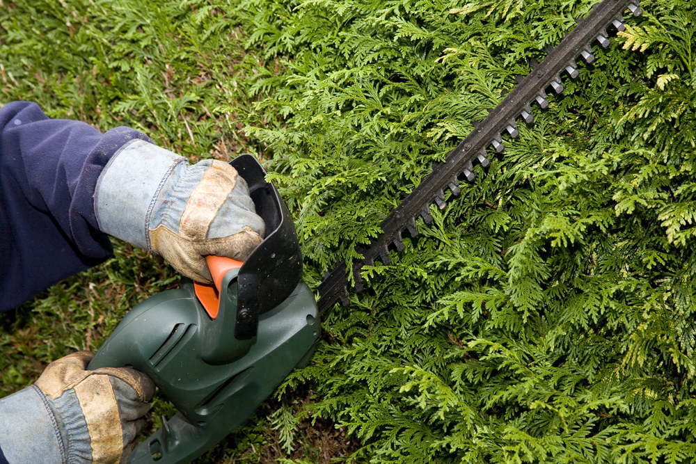 tree care professional using a chainsaw to trims hedges