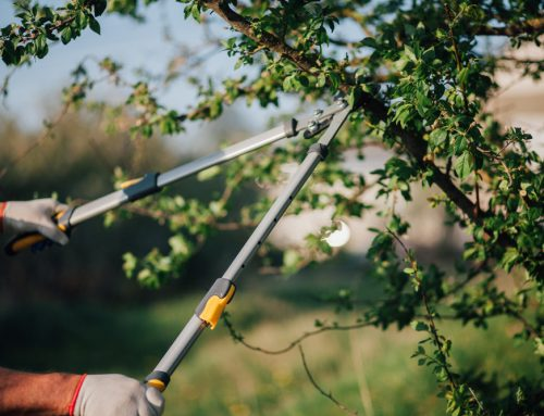 Why Regular Tree Care & Maintenance Is Important for Tree Health