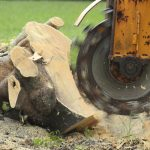 stump grinding machine taking care of tree stump removal