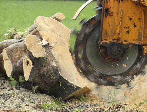 Why You Should Hire An Expert For Stump Removal