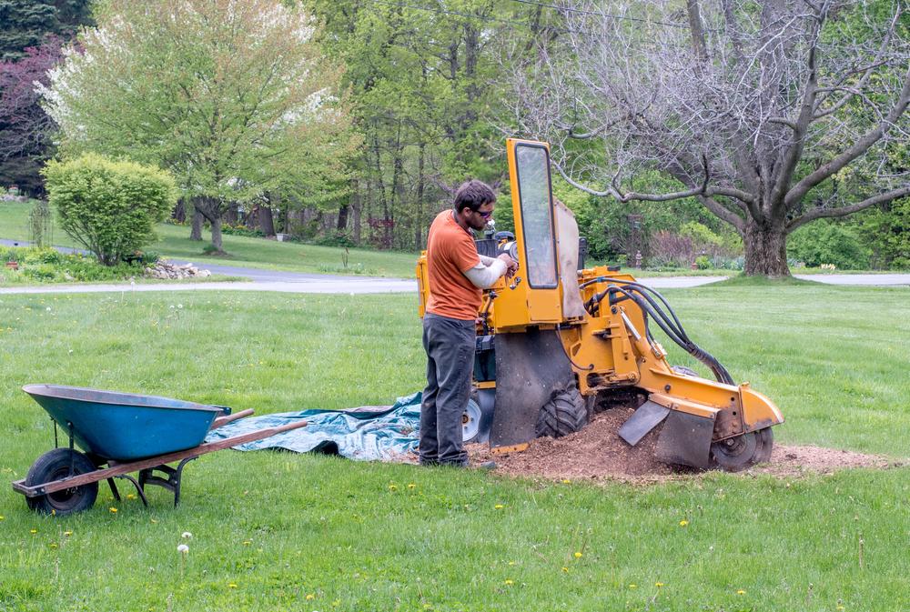 arborist using equipment to grind stump