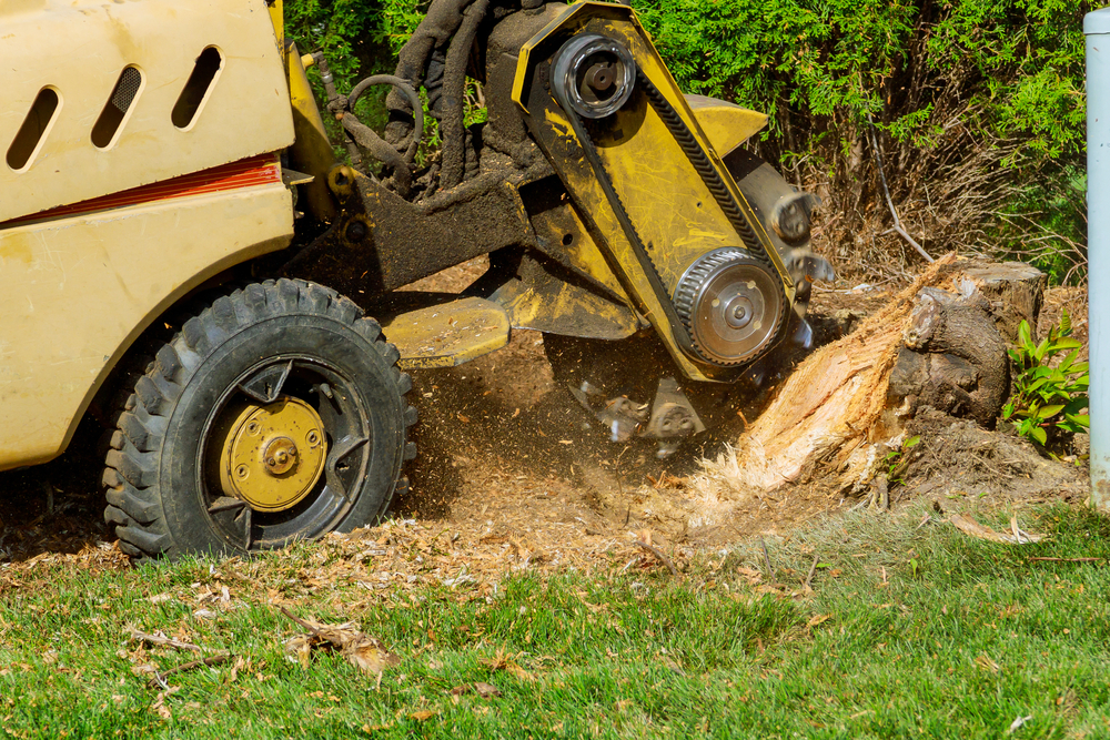 machinery used for stump removal grinding a tree stump