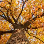an image of a tree in the fall with orange leaves