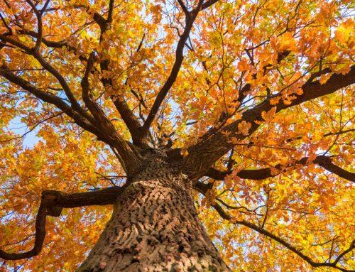 Fall Tree Care & Maintenance Tips