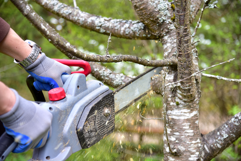 a tree branch being removed by a chainsaw held by an arborist