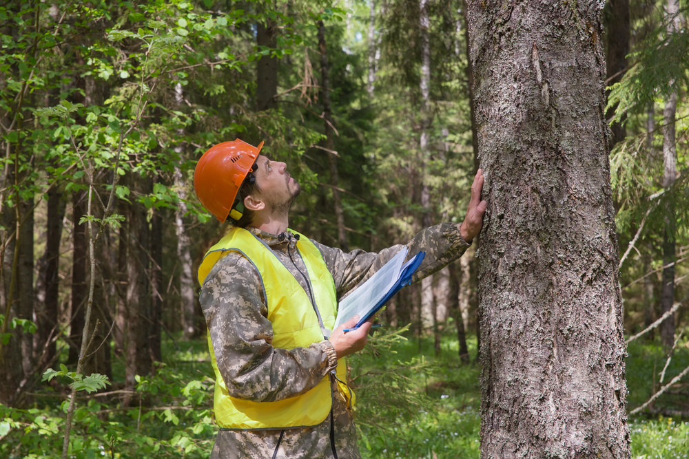 an arborist inspecting a tree for diseases with a clipboard